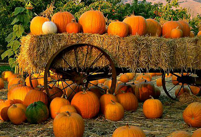 Pumpkin Patch and Hay Rides